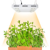 Greenhouse Indoor Top Quality Promotion LED Grow Light 600W