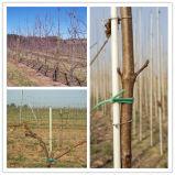 Fiberglass Rod for Vineyard Support Rods
