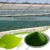 Manufacturer Unflavoured Natural Spirulina Powder