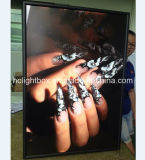 Wall Mounted Poster Board Snap Frame Light Box
