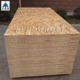 1220X2440mm OSB Board / WBP Glue OSB Board
