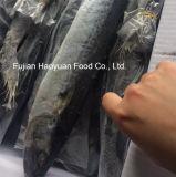 Chinese Supplier of Frozen Processed Spanish Mackerel