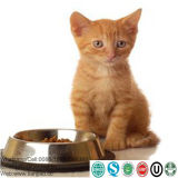 Feeding Kittens Milk Replacer Powder