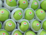 Top Quality Fresh Green Gala Apple Factory