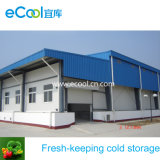Large Size and Volume Low Temperature Cold Storage and Equipment for Vegetables and Fruits