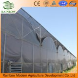 Multi-Span Po Film Greenhouse for Tomato Growing