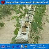 Nft Hydroponics System for Vegetable Growing