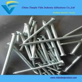 China Biggest Factory Concrete Nails with Lowest Prices
