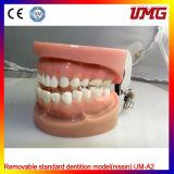 Removable Standard Dentition Model for Teaching