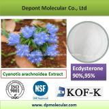 Cyanotis Arachnoidea Extract, 20-Beta-Hydroxy-Ecdysterone, Ecdysterone 90%, 95%
