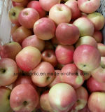 New Crop Fresh Gala Apple