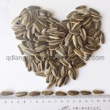 2014 New Crop Sunflower Seeds 5009