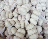 Fresh Normal White Garlic 3p