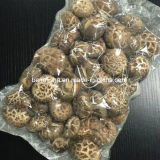 Dried Mushroom (White Flower)