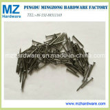 Common Nail/Iron Round Nail in Competitive Price and High Quality