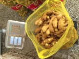 150g up Fresh Ginger for Pakistan Market