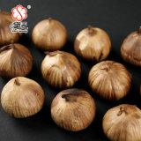 Allium Sativum L. Aged Black Garlic Powder? ? ? ? 1000g