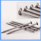 Made in China Round Common Nail for Construction