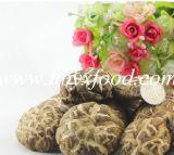 Tea Flower Shiitake Mushroom with SGS Halal Certificate Health Food