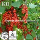100% Natural Schisandra Chinensis Extracts, Schisandra Chinensis Extract 9% Schisandrins, Fructus Schisandrae Chinensis