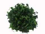 IQF Spinach Cut