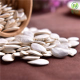 Wholesale Green Snow White Pumpkin Seeds 13cm