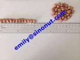 New Peanut Kernels (60/70)