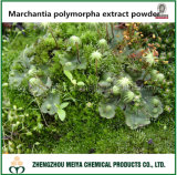 Liverwort / Marchantia Polymorpha Extract Powder with 20%, 50% Saponin