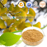 Manufacturer Ginkgo Biloba Extract Powder Ginkgo Flavone Bulk Price