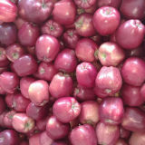 New Crop Chinese Fresh Red Huaniu Apple
