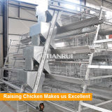 Tianrui Design Best Build Durable Poultry Automatic Feeding System