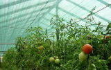 UV Protection Sunshade Net for Greenhouse Nursery