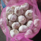 4.5cm, 5.0cm, 5.5cm, 6.0cm Pure White Garlic with Mesh Bag