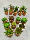 Artificial Plants and Flowers of Succulent Plant Gu809204553