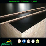 Marine Plywood/Tego Film Faced Shuttering Plywood with Logo
