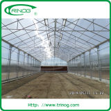Multispan polycarbonate greenhouse for commercial used