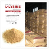 Supply 98.5% Lysine HCl with Low Price