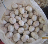 Size 4.5cm, 5.0cm, 5.5cm and 6.0cm up Cheap Price and Good Quality Fresh White Garlic with SGS Certification