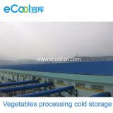 Large Size Vegetables and Fruits Processing Cold Room