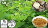 High Quality Pueraria Lobata /Kudzu Extract Isoflavones: 40%-98%; Puerarin: 30%-98%