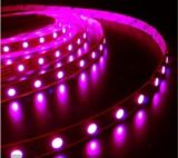 Flexible LED Strip (XDS-SW60F010Y-3528)