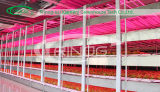 Commercial Film Greenhouse with cooling pad with fans