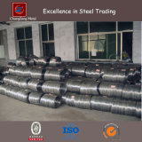 Stainless Steel Wire Rod with Mesh Function (CZ-W65)