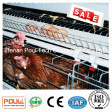 Poul Tech Poultry Farm Layer Chicken Cage (Hot Galvanization)