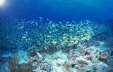 GMP Certified Refined Fish Oil-Cod Liver Oil