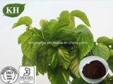 Diabetes Therapy Mulberry Leaf Extract 1-Deoxynojirimycin (1-DNJ) 1%-15% by HPLC