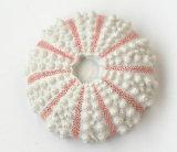 Hot Sale Souvenir Polyresin Seashell Fridge Magnet