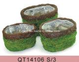 Decorative Round Moss Planters - (3 piece set)