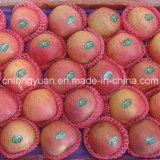 Good Quality Chinese Fresh Qinguan Apple