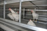 H Type Frame Automatic Chicken Poultry Cage Farm Equipment for Breeder Chicken